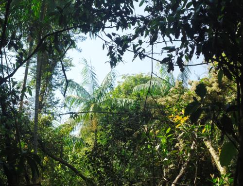 Estudos de Impactos Ambientais (EIAs)