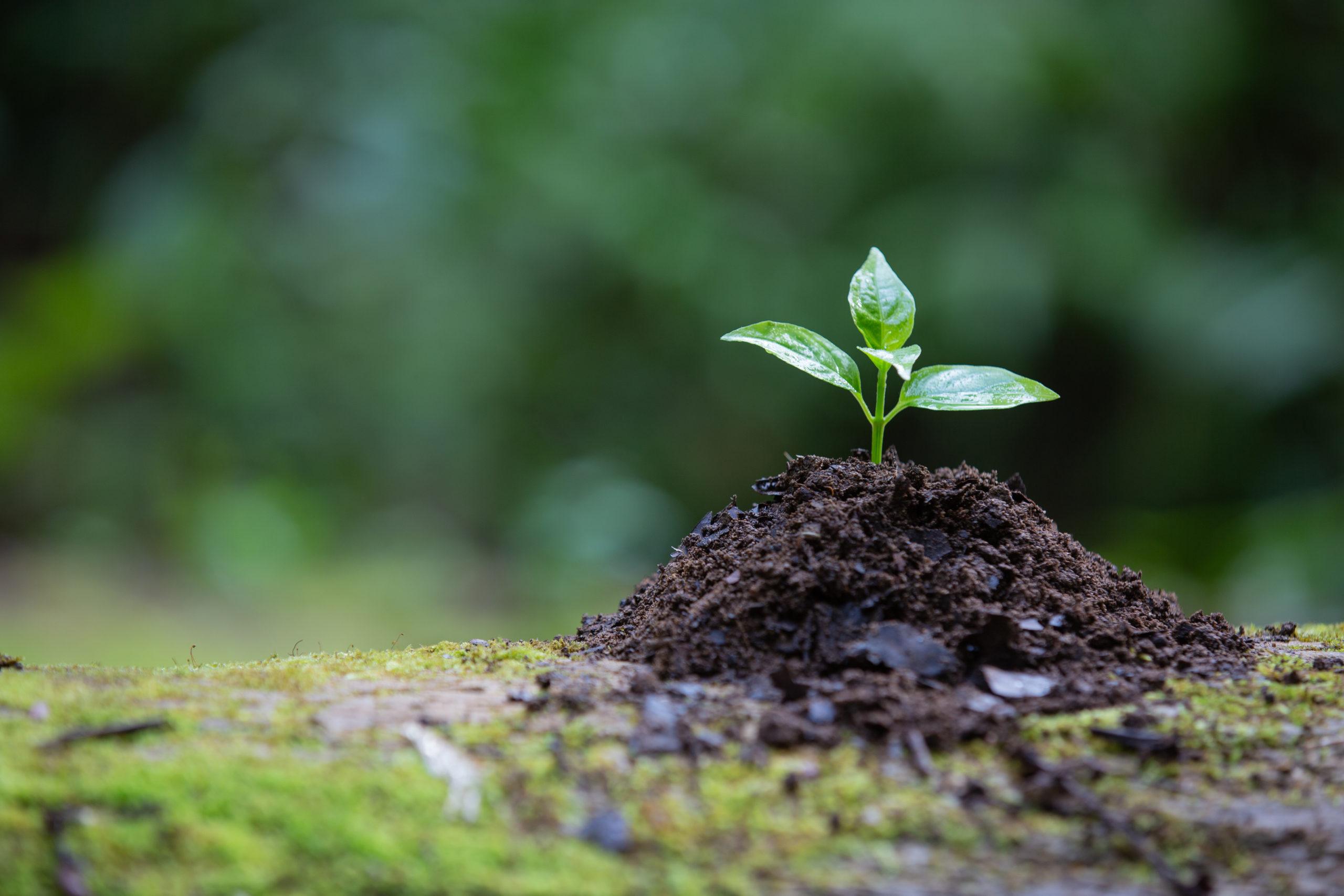 o que é consultoria ambiental