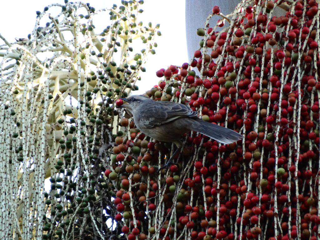 Pássaro comendo frutos exóticos