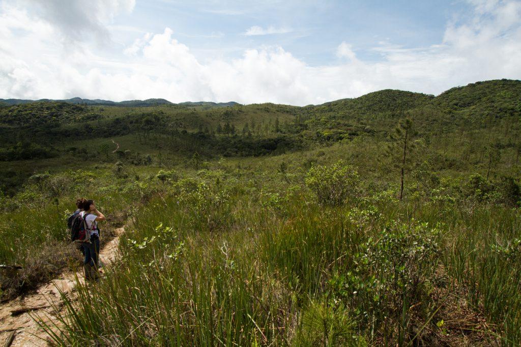 Campo nativo com invasão por Pinus